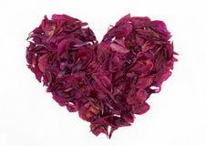 Uitstekende mooie die hartvorm van droge geïsoleerde pioenbloemblaadjes wordt gemaakt Stock Fotografie