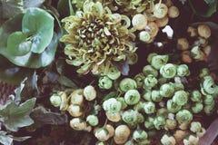 Uitstekende oude bloemachtergronden Stock Fotografie
