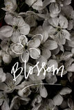 Uitstekende oude bloemachtergronden - uitstekende effect stijlbeelden Royalty-vrije Stock Foto