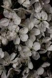Uitstekende oude bloemachtergronden - uitstekende effect stijlbeelden Stock Afbeeldingen