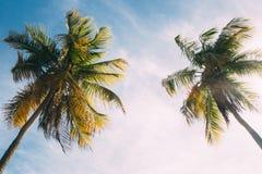 Uitstekende palmen royalty-vrije stock afbeelding