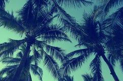 Uitstekende Palmenbomen Stock Afbeeldingen