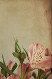 Uitstekende prentbriefkaar met Alstroemeria Stock Foto