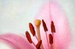 Uitstekende retro stijl roze Lelies stock illustratie