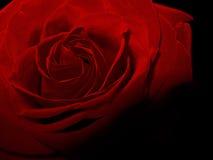 Uitstekende rood nam de donkere macrofoto van de bloemschaduw toe Stock Foto's