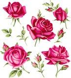 Uitstekende rood nam en de knopreeks toe Vector bloemen Royalty-vrije Stock Foto