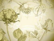 Uitstekende rozen Royalty-vrije Illustratie