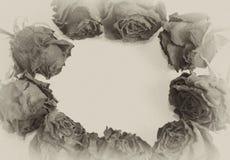 Uitstekende rozen die een frame vormen stock afbeeldingen