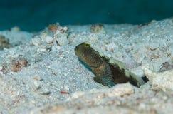 Uitstekende schepselen onderwater in de Maldiven stock foto