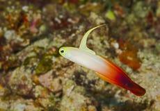 Uitstekende schepselen onderwater in de Maldiven royalty-vrije stock foto