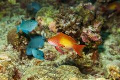 Uitstekende schepselen onderwater in de Maldiven royalty-vrije stock fotografie