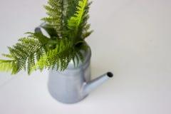 Uitstekende stijlgieter Metaalgieter met groene varen royalty-vrije stock afbeelding