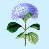 Uitstekende tekening van bloem Vector illustratie stock illustratie