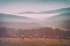 Uitstekende troep van schapen royalty-vrije stock afbeelding
