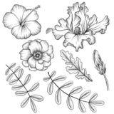 Uitstekende vector bloemenreeks vector illustratie