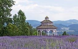 Uitstekende Victoriaanse Gazebo in de Bloemen van de Lavendel Stock Foto's