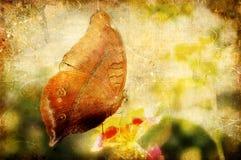 Uitstekende vlinder Stock Foto