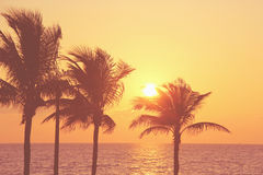 Uitstekende zonsopgang stock foto