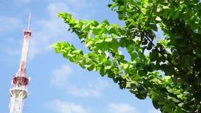 Uitzending die antenne voor radio en televisiesignaal op groene boom, blauwe hemelachtergrond overbrengen stock videobeelden