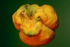 Uitzonderlijke citroen Royalty-vrije Stock Fotografie