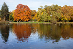 Ujazdowski Park in Warsaw. Lake and autumn trees with reflections on water in the Ujazdowski Park, city center of Warsaw, Poland royalty free stock images