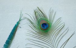 Two different peacock feathers from spiritual place ,Ujjain. Ujjain is one of the most popular spiritual destination in India.The peacock feather we got directly Royalty Free Stock Image