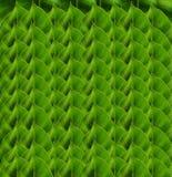 Układa zielonego liścia tło Fotografia Stock