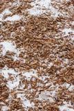 układ scalony snow drewno Zdjęcia Stock