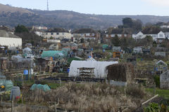 Uk Allotments Showing Social Housing Royalty Free Stock Image