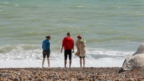 UK, Brighton. Three young pupils on summer vacation standing on the beach near the water of Atlantic ocean. Friends wet. Their feet in the surf. The seagulls stock footage