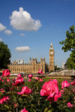uk duży Ben róże London obrazy stock