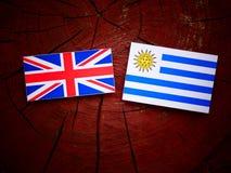 UK flag with Uruguaian flag on a tree stump isolated Stock Photos