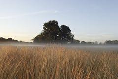 UK Foggy field in winter Stock Photo