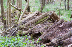 UK habitat decaying wood pile Stock Image