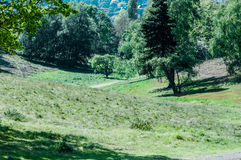 UK habitat grassland with scattered trees Stock Photography