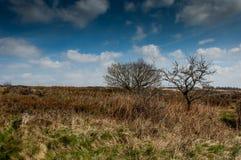 UK habitat moorland Stock Photography