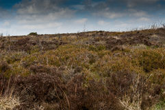 UK habitat moorland Stock Photos