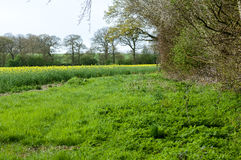 UK Habitats arable field edge. With headlands and hedgerows Royalty Free Stock Photography