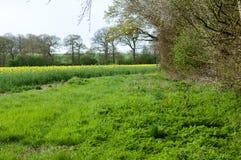 UK Habitats arable field edge Royalty Free Stock Photography