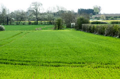 UK Habitats arable field edge. With headlands and hedgerows Royalty Free Stock Images