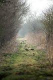 UK habitats footpath along a flood bank. UK habitats footpath running along a floodbank lined with willows (Salix) trees Royalty Free Stock Photo