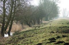 UK habitats footpath along a flood bank. UK habitats footpath running along a floodbank lined with willows (Salix) trees Stock Photos