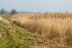 UK habitats reedbed and grassland interface Royalty Free Stock Photo