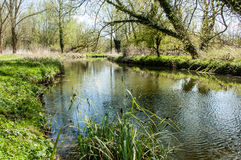 UK habitats river course. UK habitats natural river course with associated trees and marginals Stock Photography