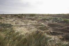 UK Norfolk field of grass Stock Photo