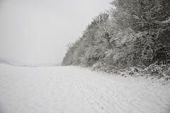 UK snowy field and forest Stock Photography