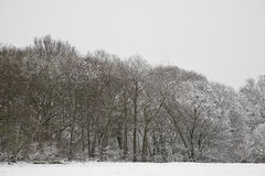 UK snowy field and forest Stock Photos