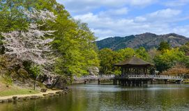 Ukimido Gazebo during cherry blossom royalty free stock photography