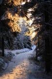 Ukko Koli,芬兰,年2008年 免版税库存照片