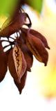Uknown fruites in het eiland van Rhodos Stock Afbeeldingen